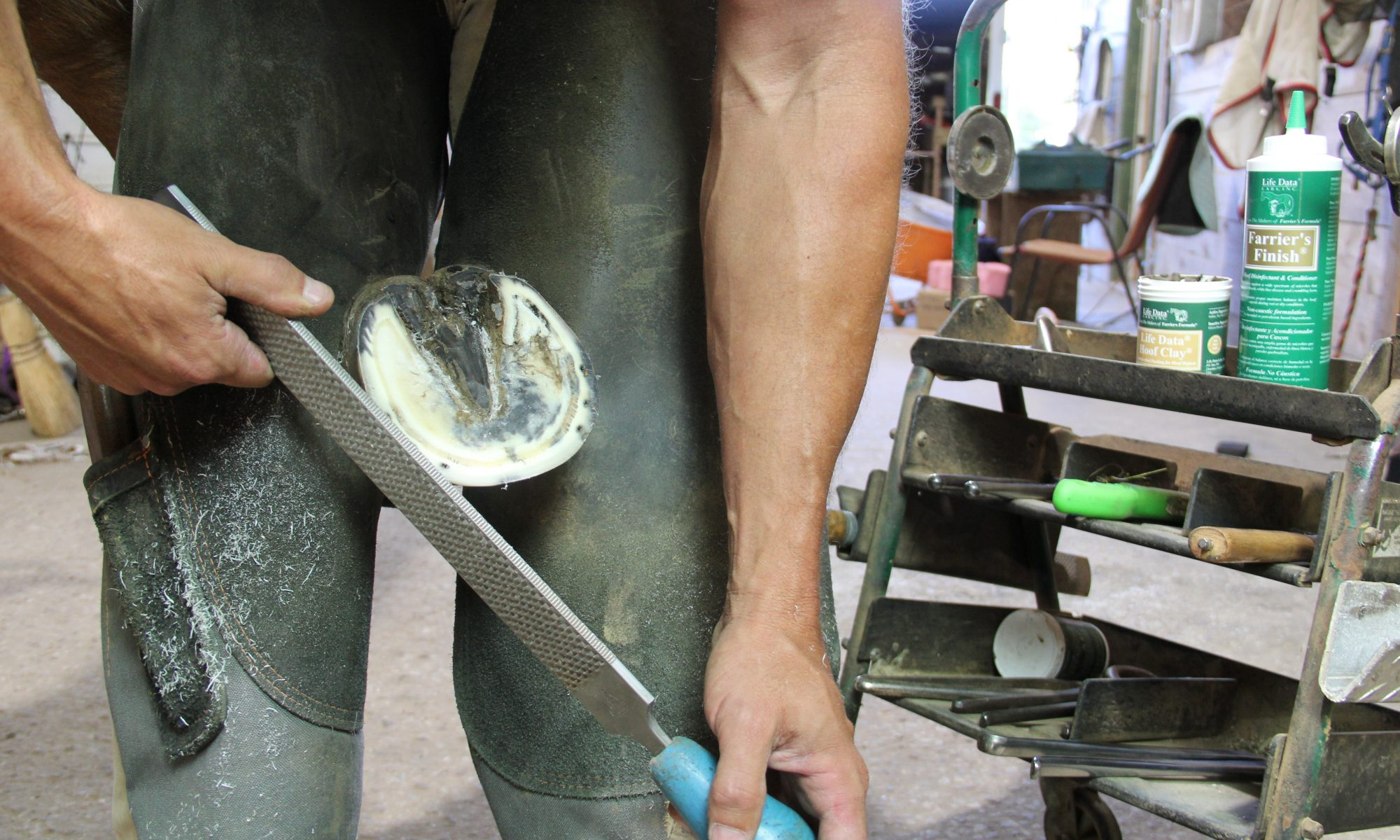 Farrier Trimming Hoof