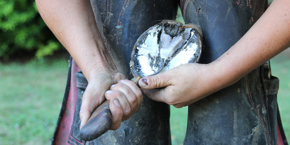 Farrier on Hoof with Thrush