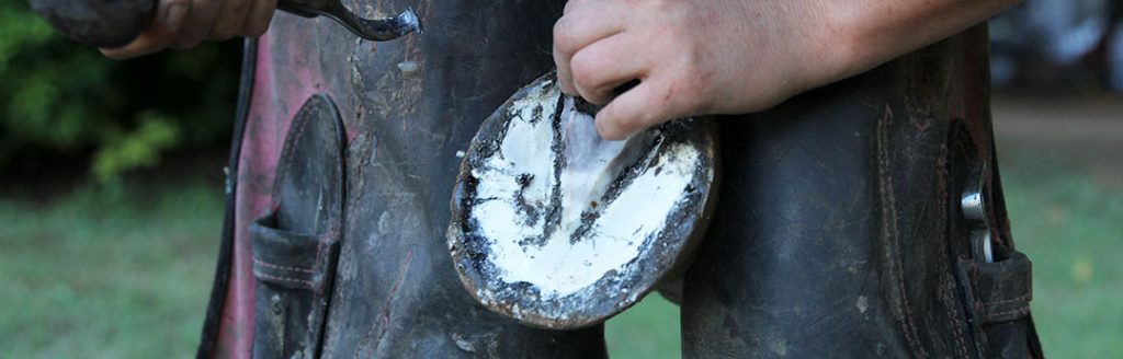 Horse Hoof with mild thrush